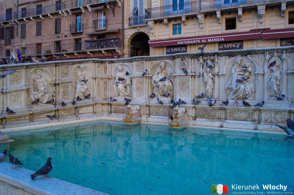 Fonte Gaia na Piazza del Campo w Sienie, Toskania, Włochy (fot. Ł. Ropczyński, kierunekwlochy.pl)