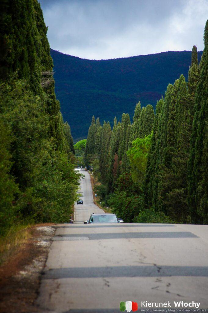 Viale dei Cipressi, Bolgheri, Włochy (fot. Łukasz Ropczyński, kierunekwlochy.pl)