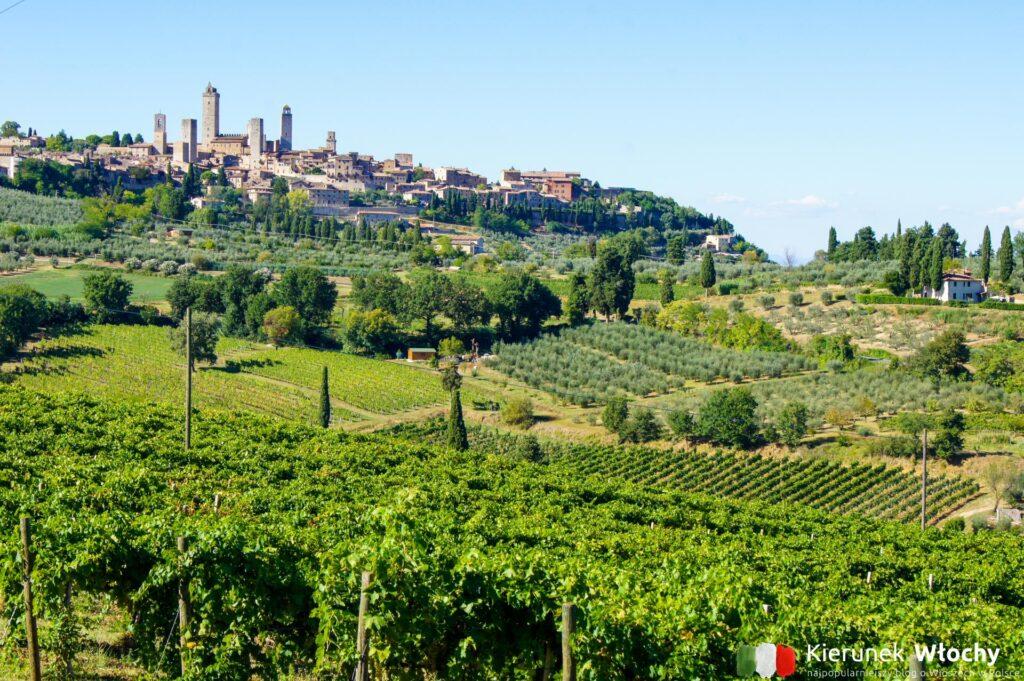 Toskania, w tle widać San Gimignano, które niemal otoczone jest przez winnice. Nie ma nic wspanialszego niż nocleg gdzieś na wzgórzach nieopodal w agroturystyce z basenem (fot. Łukasz Ropczyński, kierunekwlochy.pl)