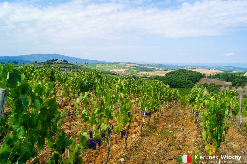 Toskania, uprawa winorośli w regionie Chianti przy antycznej drodze SR222 - czyli wzdłuż trasy Chiantigiana (fot. Łukasz Ropczyński, kierunekwlochy.pl)