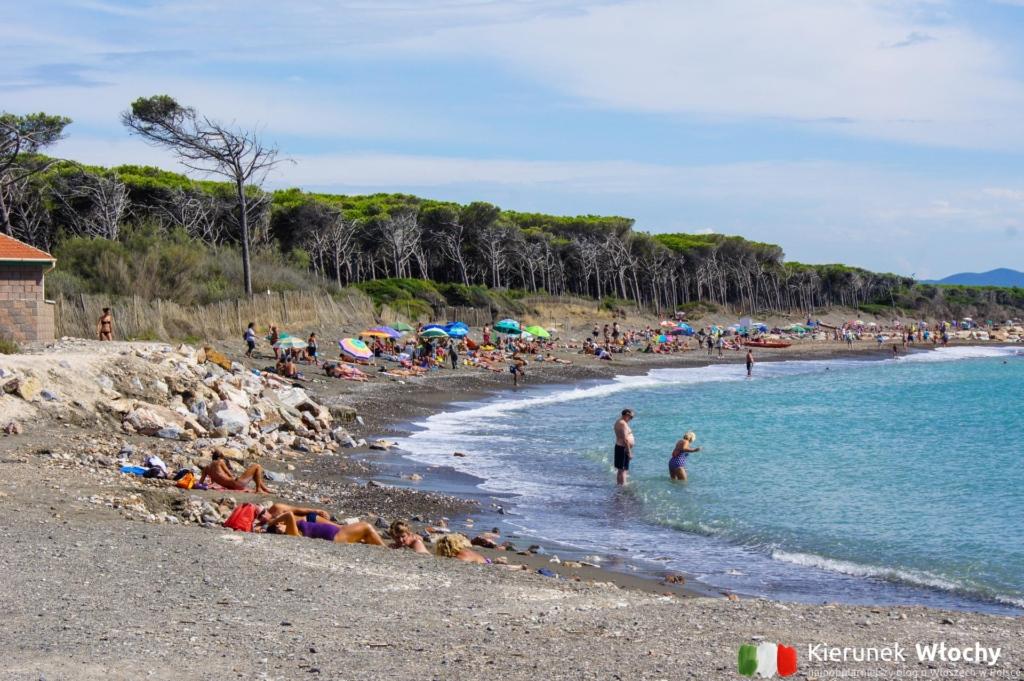darmowa plaża w południowej części Ceciny, widok w kierunku Marina di Bibbona (fot. Łukasz Ropczyński, kierunekwlochy.pl)