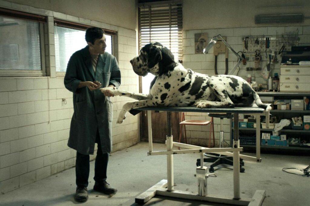 Dogman, reżyseria: Matteo Garrone