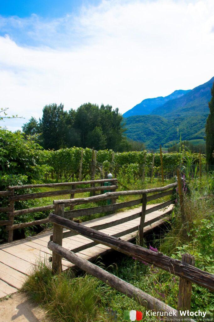 spacer wokół jeziora Kalterer See / Lago di Caldaro, Południowy Tyrol, Włochy (fot. Łukasz Ropczyński, kierunekwlochy.pl)