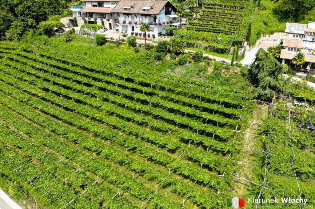wzdłuż jeziora przebiega najstarszy szlak winny we Włoszech (fot. Ł. Ropczyński, kierunekwlochy.pl)
