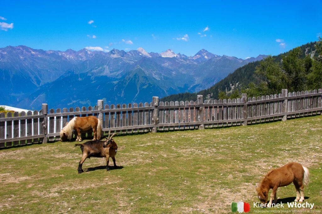 mini ranczo na Meran 2000, Południowy Tyrol, Włochy (fot. Ł. Ropczyński, kierunekwlochy.pl)
