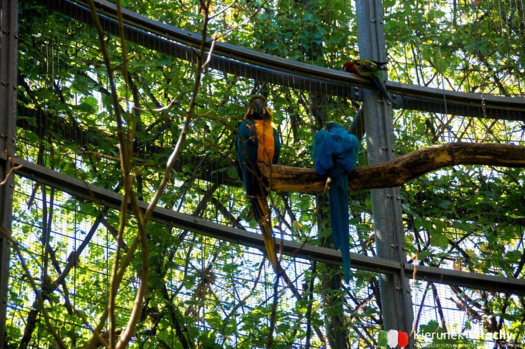 w górnej części ogrodów można podziwiać papugi (fot. Ł. Ropczyński, kierunekwlochy.pl)