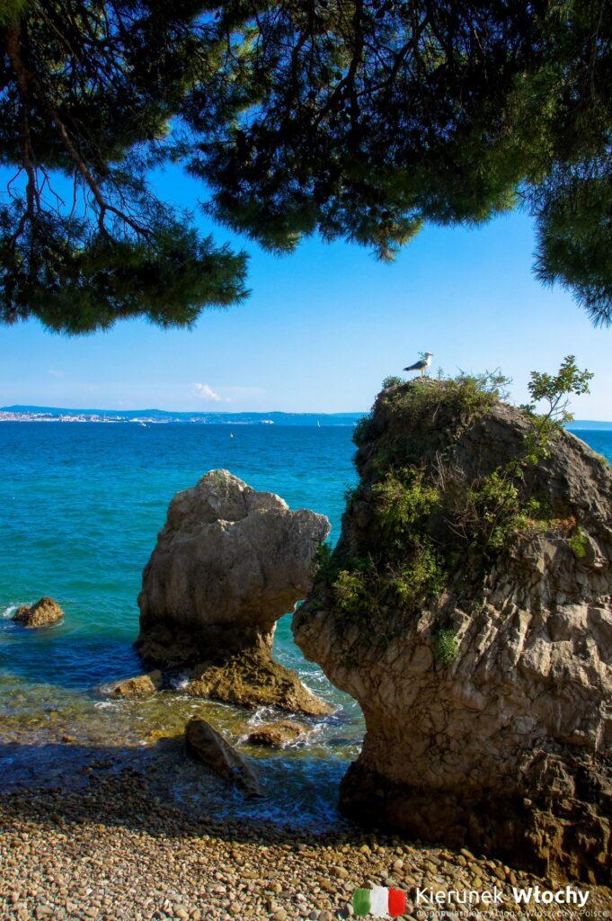 plaża w sąsiedztwie Zamku Miramare w Trieście, Włochy (fot. Łukasz Ropczyński, kierunekwlochy.pl)