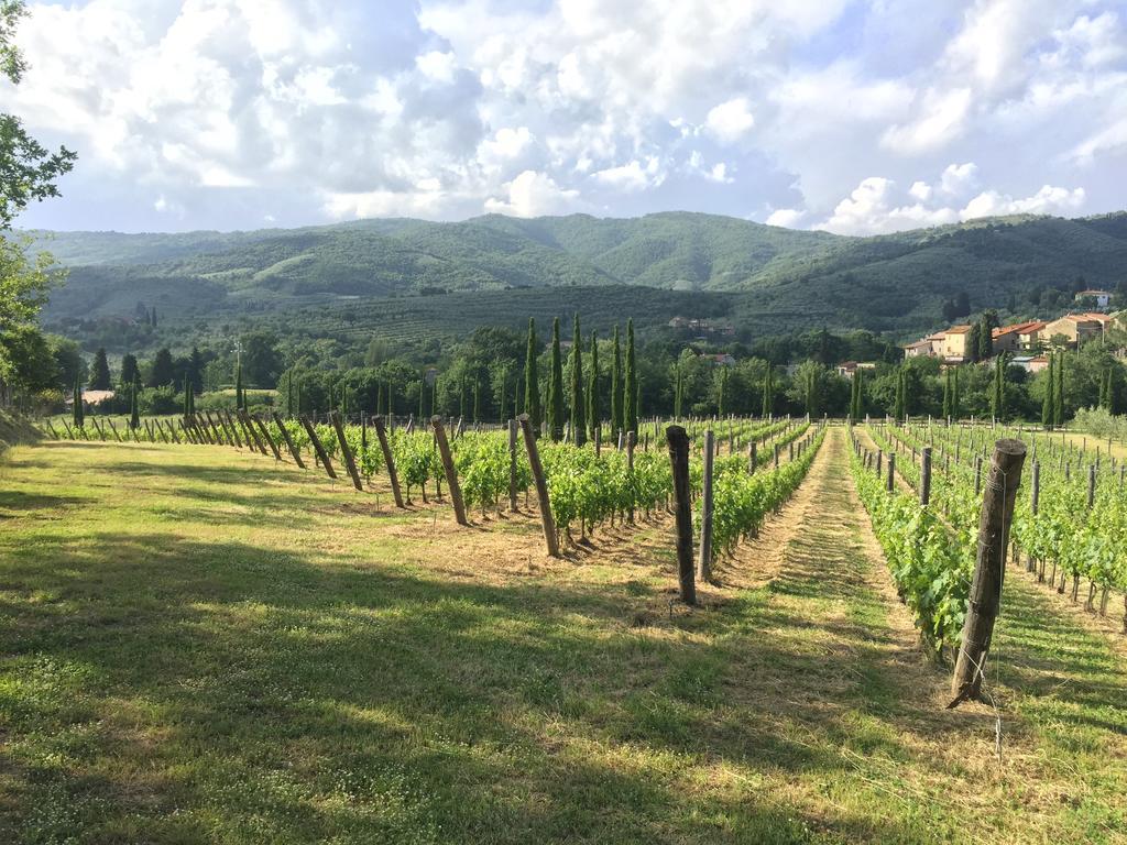 Casa Portagioia posiada własną winnicę oraz gaj oliwny
