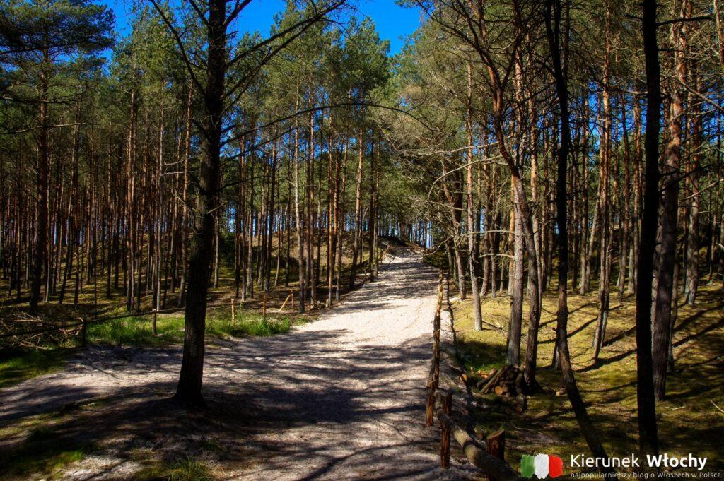 ścieżka z parkingu przez las na plażę w Grzybowie (fot. Łukasz Ropczyński, kierunekwlochy.pl)
