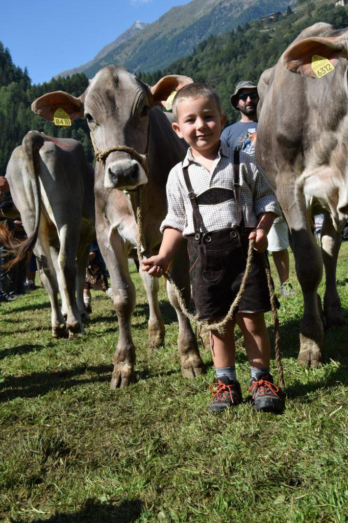 krowy są nieodłącznym elementem tutejszego krajobrazu, Dolomity latem