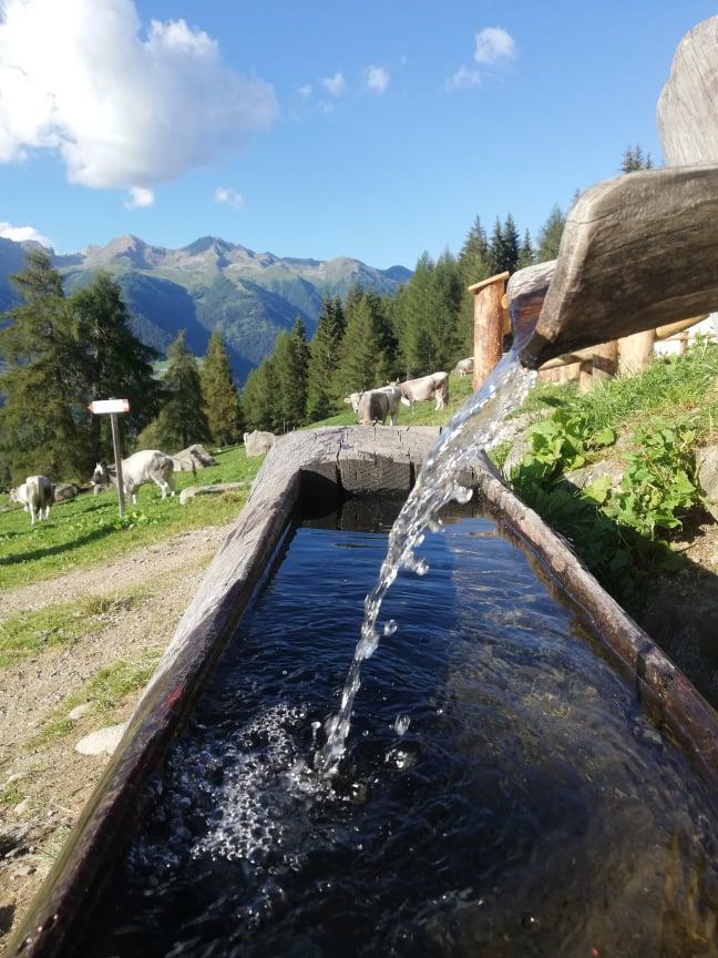 wodopoje że źródlaną wodą są charakterystycznym elementem tutejszego krajobrazu
