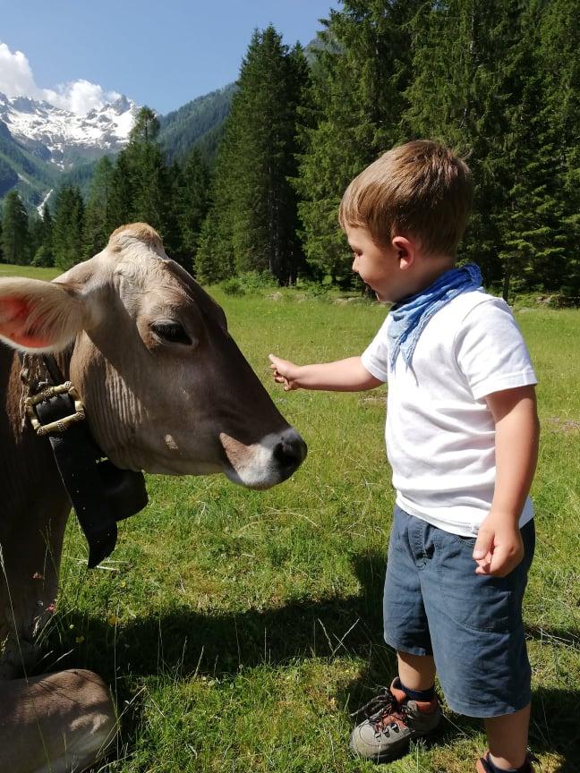 liczne zagrody ze zwierzętami są atrakcją dla dzieci