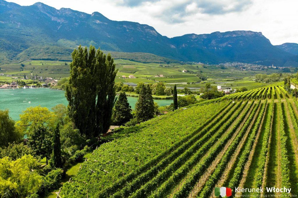 uprawy winorośli nad jeziorem Lago di Caldaro na południe od Bolzano, Południowy Tyrol, Włochy (fot. Łukasz Ropczyński, kierunekwlochy.pl)