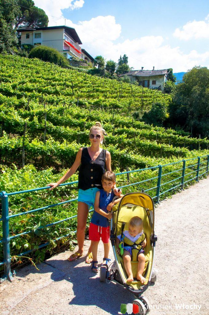uprawy winorośli w Południowym Tyrolu spotykaliśmy na każdym kroku, na zdjęciu powyżej w Merano (fot. Łukasz Ropczyński, kierunekwlochy.pl)